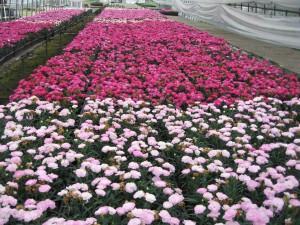 花卉販売・卸