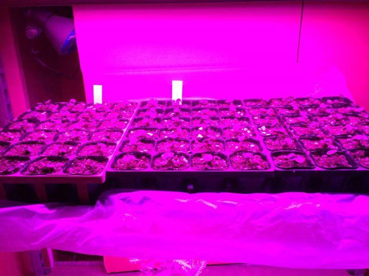 植物用LEDの販売・卸