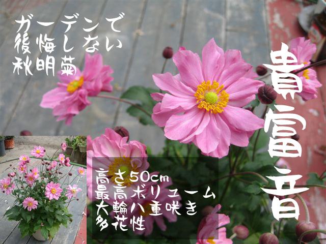きふね (2)