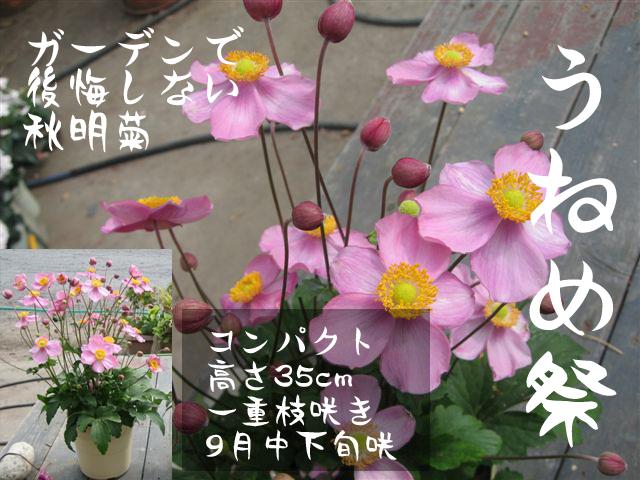 うねめ祭り